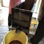 シェア仕込みの醤油を搾って、手作り醤油たっぷりゲットしました!